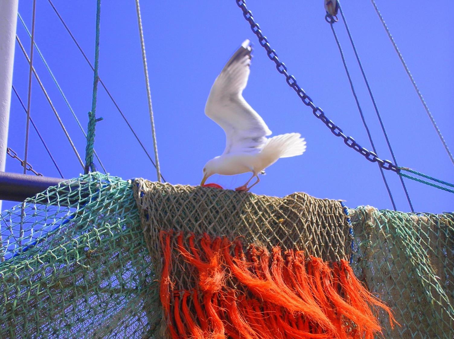 Fichernetz mit Möwe k